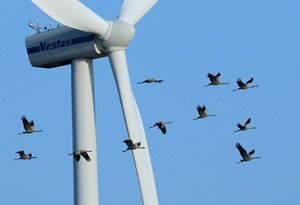 image: ISO ports and marine operations wind farm energy