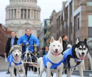 image: UK London freight logistics huskies dogs hauliers express parcels