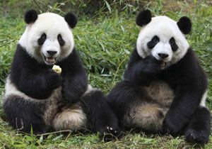 image: DHL intercontinental cargo panda logistics freight China Belgium Hao Hao Xing Hui