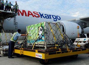 image: Belgium Israel giraffe panda freight forwarding logistic puns air cargo China Malaysia