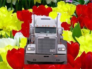 image: trucks