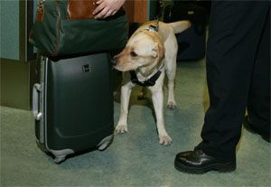 image: Australia air freight security terrorism censor hackers titstorm cargo sniffer dogs