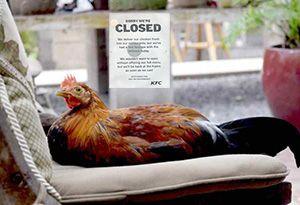 image: UK DHL KFC chicken logistics freight contract