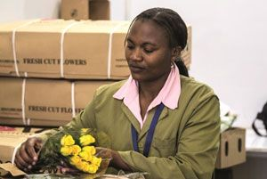 image: Panalpina global logistics temperature freight forwarding group flowers Kenya Netherlands Switzerland
