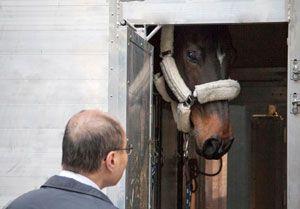 image: Hactl Hong Kong Longines masters freight forwarding shipping cargo handling horses