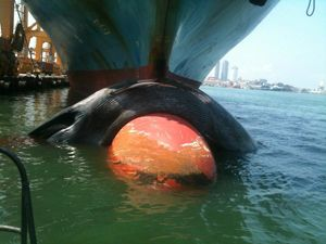 image: Sri Lanka India blue whale container shipping ecological freight