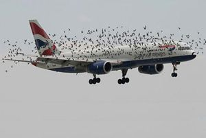 image: Dubai freight cargo airline bird strike