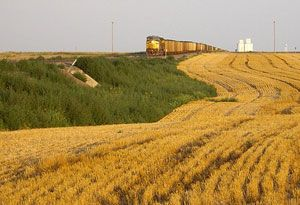 image: UK US Midwest record grain harvest CSX rail freight Scotland exports GBRf railfreight