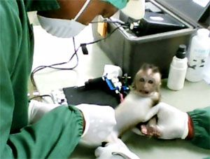 image: France NAVS Anti-Vivisection Campaign Mauritius UK monkey experimentation Wendy Turner-Webster cargo