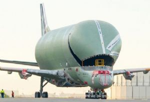 image: Airbus France heavy lift special project freight BelugaXL whale sturgeon pirate murder