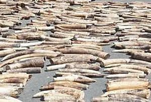 image: Kenya shipping container elephant ivory cargo illegal consignment