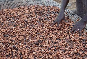 image: Netherlands Ivory Coast Port of Amsterdam Autonome de San Pedro chocolate food of the Gods cocoa importer exporting logistics supply chain