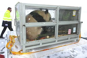 image: China DHL freight forwarding logistics giant panda Finland climate neutral flight