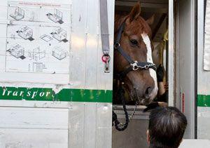 image: Hong Kong freight forwarder horses livestock thoroughbred herd Hactl cargo handler